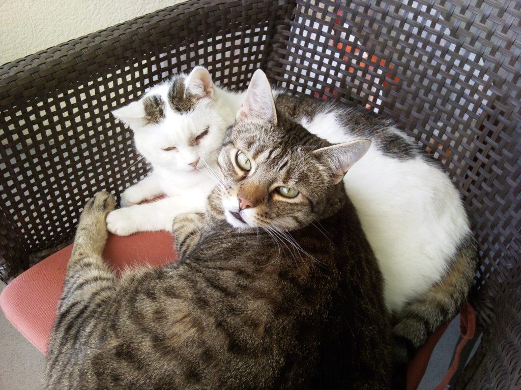 Monti und Minouche