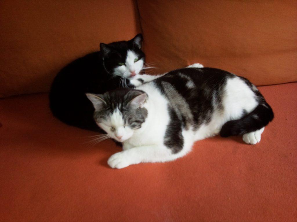 Rosali und Schmugo